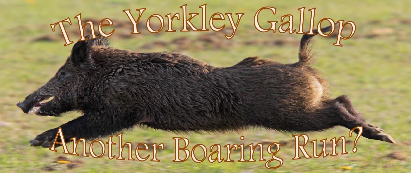 yorkley-boar-logo